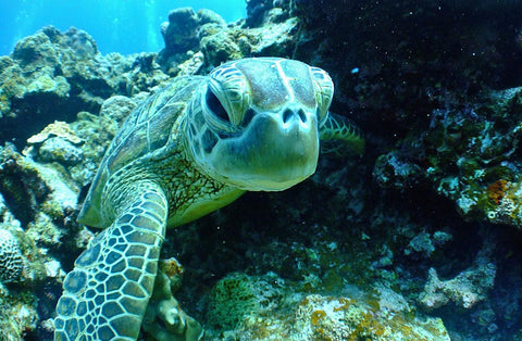 Where Do Sea Turtles Live?