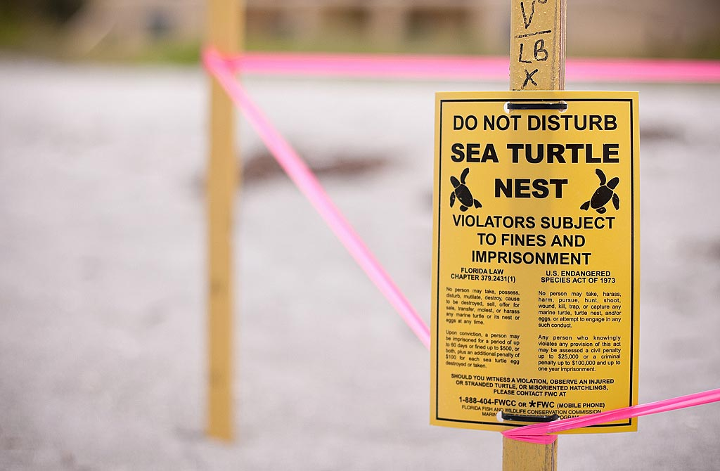 Yellow Sea Turtle Nest Sign