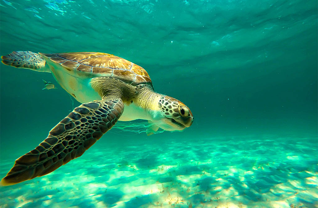What is a Sea Turtles Favorite Food? - SeaLife.gifts