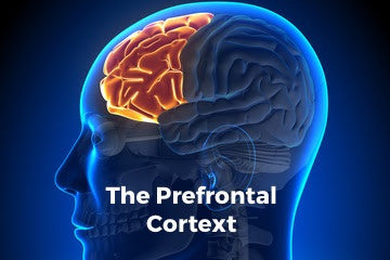 The prefrontal cortex and focus
