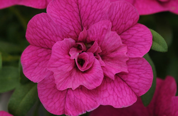 Bold, Bright, and Saturated: On-Trend Flowering Plants for 2015