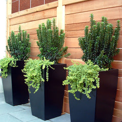 Toulan Large Tapered Square Planters - Fiberglass Planters by Jay Scotts