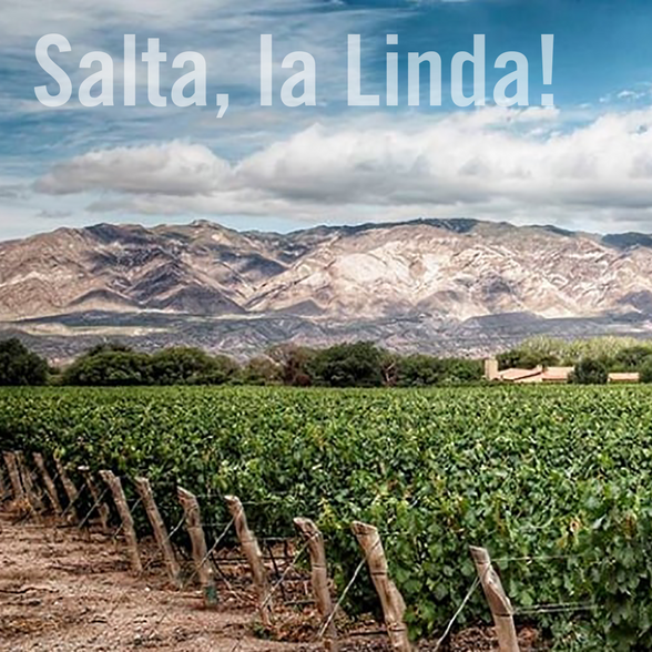 """Salta - highest wine region in the world"""
