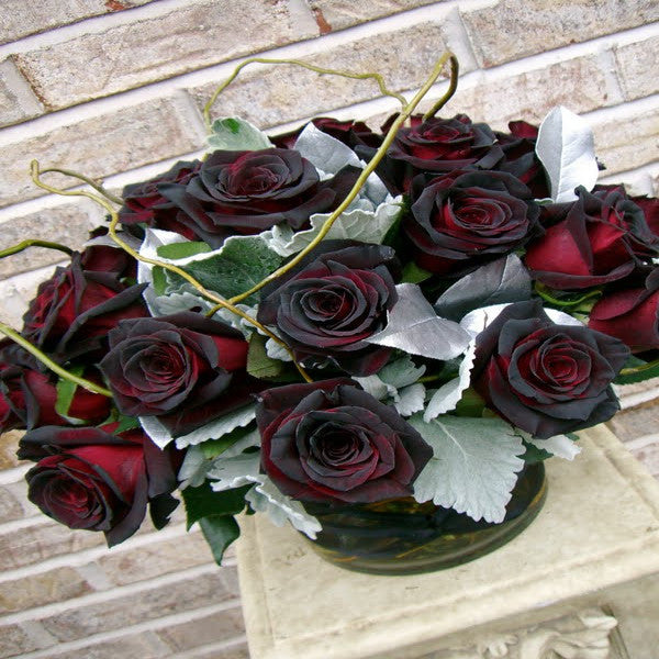 Beloe's Black Rose - Black Baccara - Long Stem Roses.