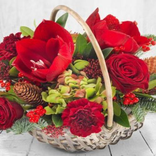 Lana -  Basket Arrangement Red Amarylis / Lime.