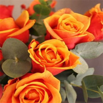 Beloe's Twelve - Orange Long Stem Roses.