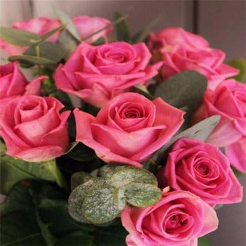 Beloe's Twelve - Pink Long Stem Roses.