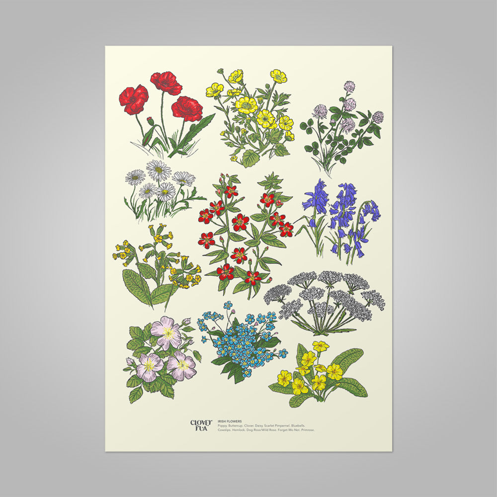 Irish Wildflower unframed print, A4 and A3; or A4 framed in black frame.