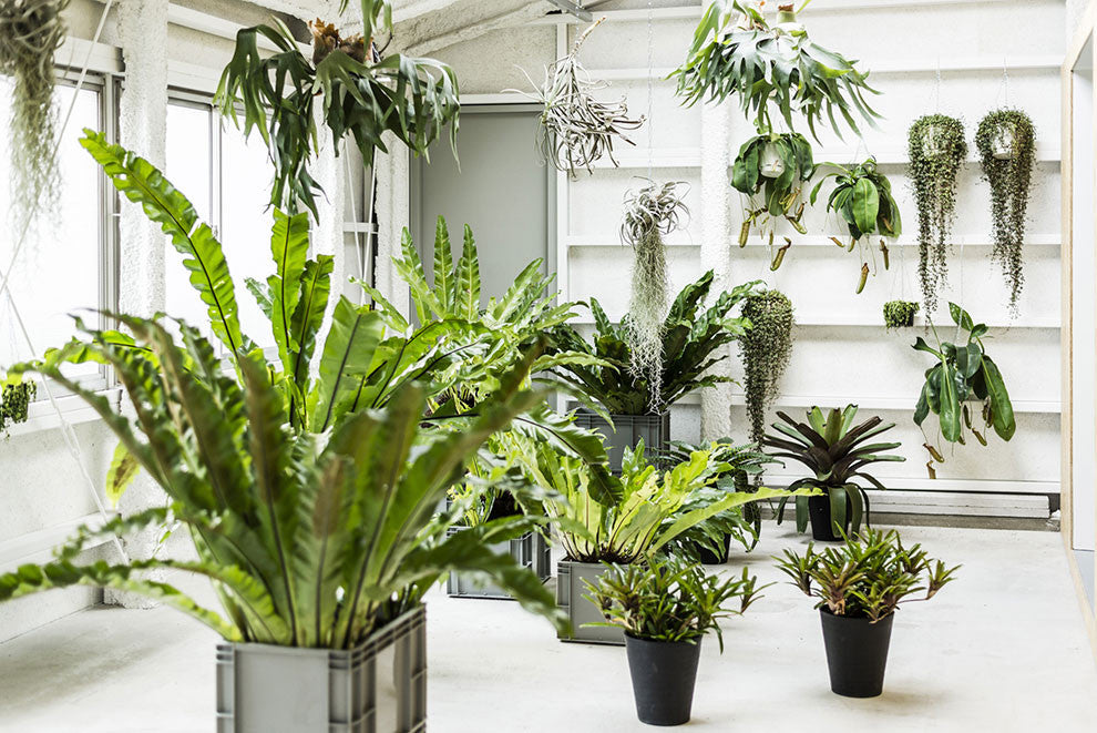 How to use feng shui to organize your plants indoors bulbo - Plants in kitchen feng shui ...