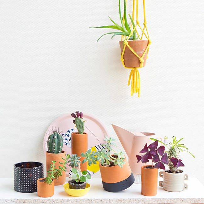 Why is it good to decorate the office with plants? 3 reasons