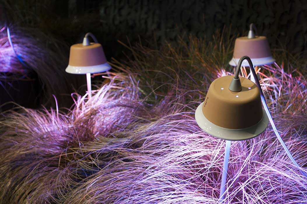 bulbo_Grow_Lights_Cynara_14
