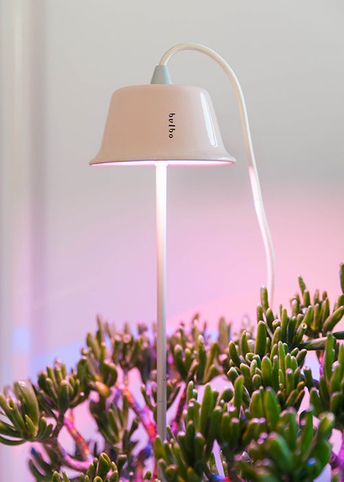 Bulbo_Grow_Lights_Cynara_05