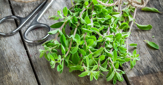 Tips and tricks for growing chives and marjoram at home