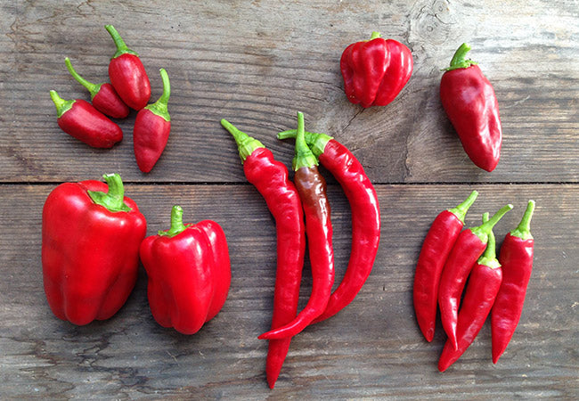 Everything you need to know to grow chili peppers at home