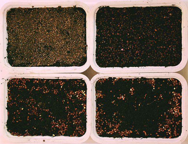 Microgreen seeds in dirt
