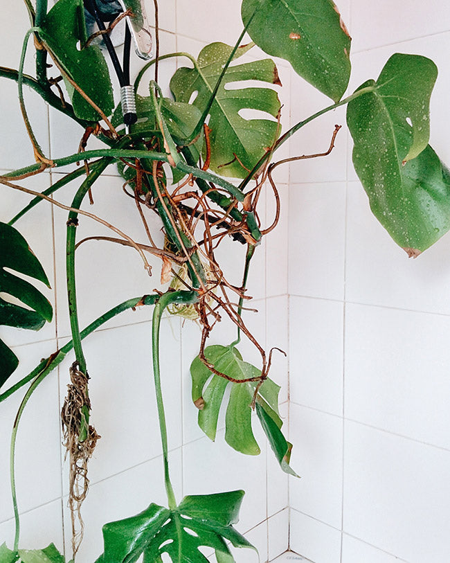 How to take care of indoor plants in 5 easy steps