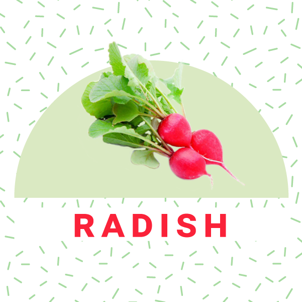 How to grow radish indoors