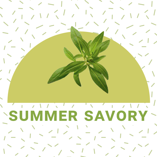 How to grow summer savory indoors