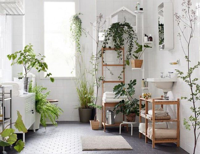 Four Simple Ideas For Decorating Your Home With Plants Bulbo