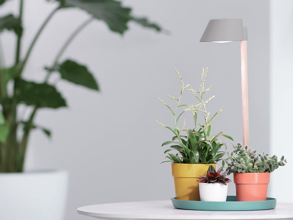 Plant light care