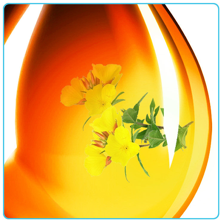 Evening Primrose, Vegetable OIls - Materia Aromatica