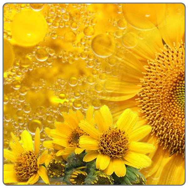 Arnica, Phytols - Plant Macerations - Materia Aromatica