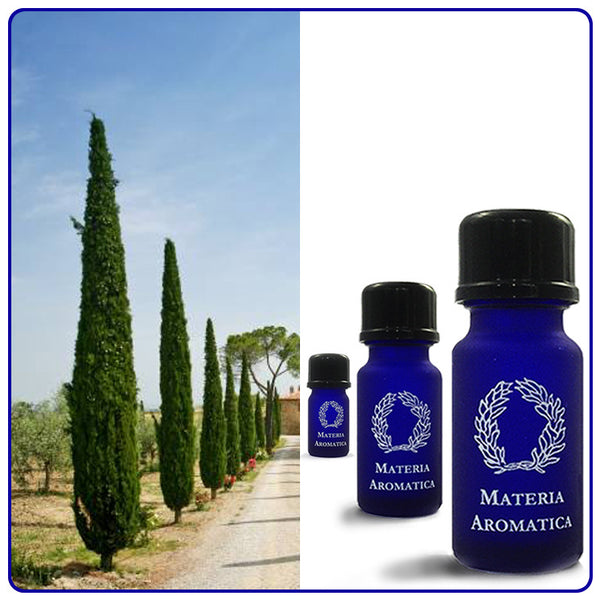 Cypress, Essential Oil - Materia Aromatica