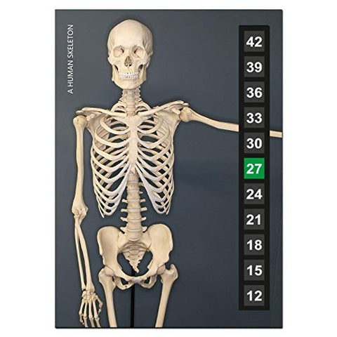 Large - Easy Read - Wide Range - Wall & Room Thermometer - The Human Skeleton