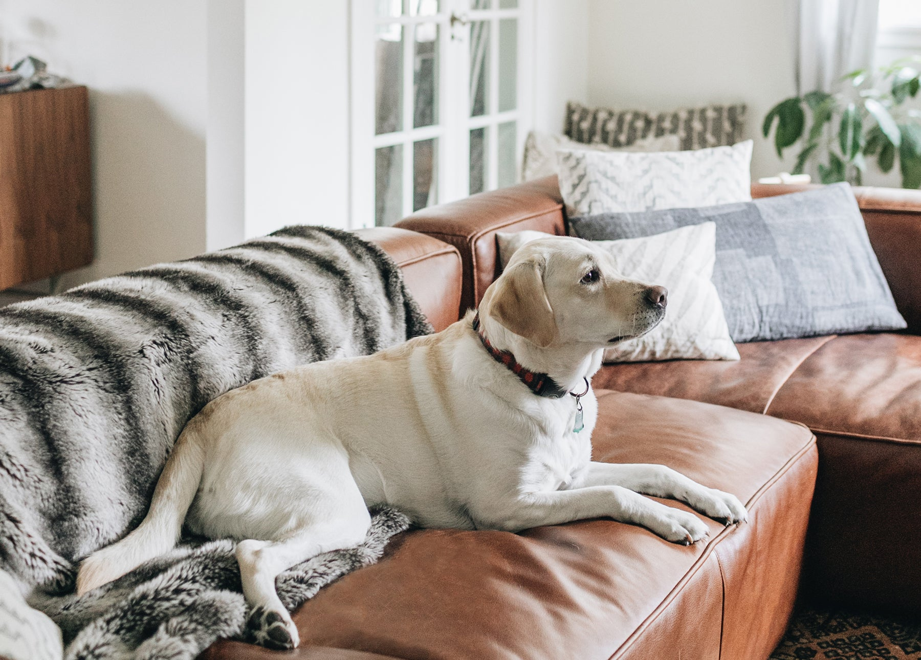 Picking Pet-Friendly Furniture