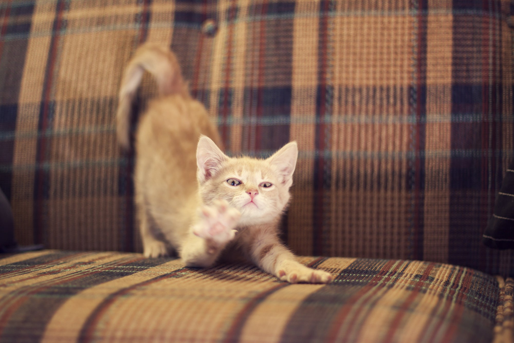 5 Meowsome Tips To Cat-Proof Your Furniture