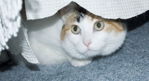 Cat hiding under bed from cat anxiety