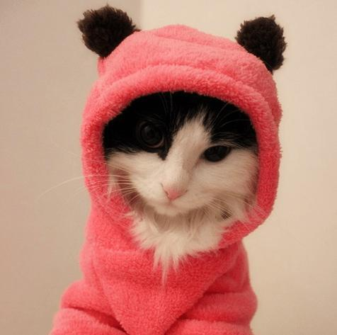 Cozy Cat Fleece-Pawsome Couture