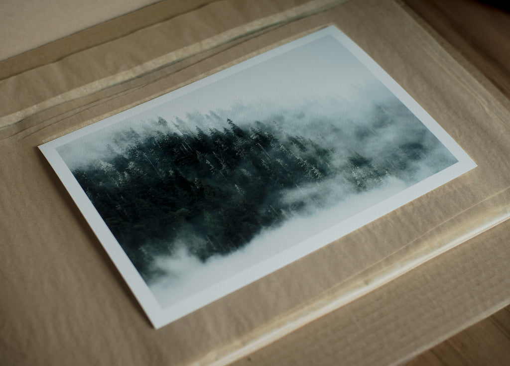west coast british columbia foggy forest print great bear rainforest