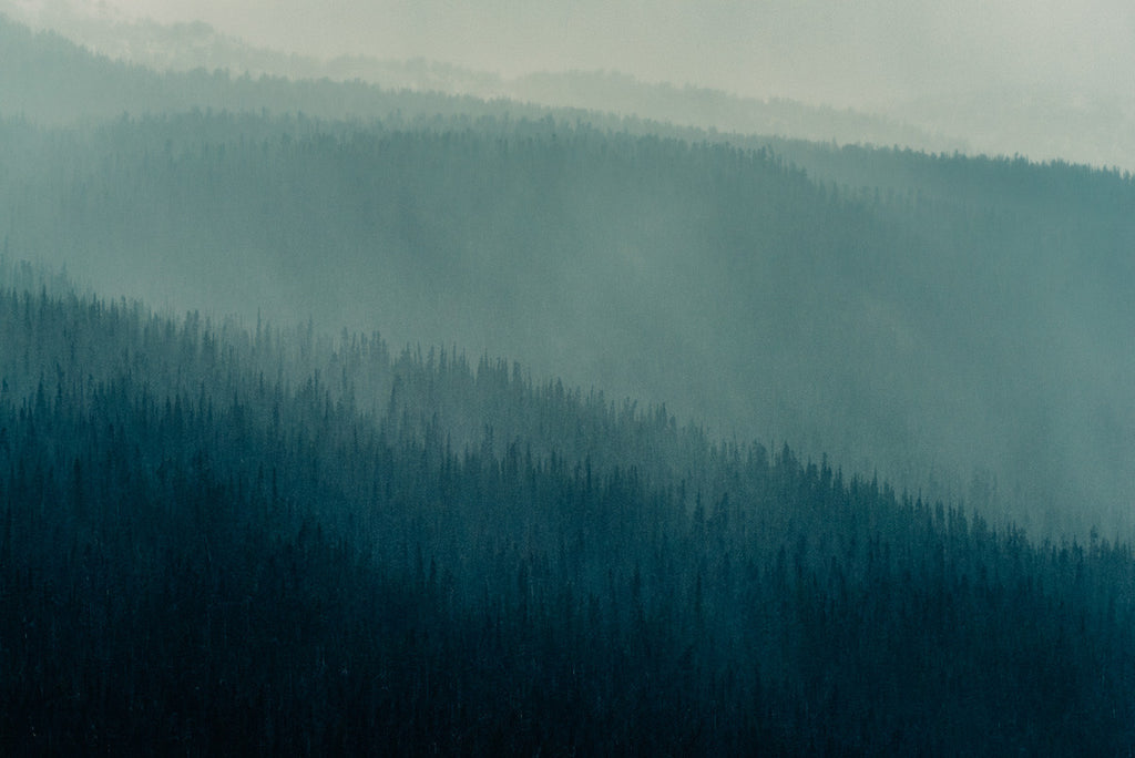 Forest Layers, Heckman Pass II