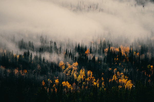 Autumn Northern British Columbia III