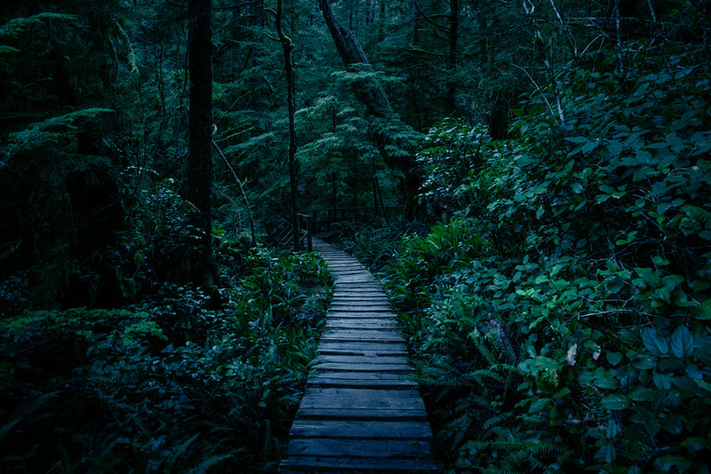 Blue Hour, Rainforest