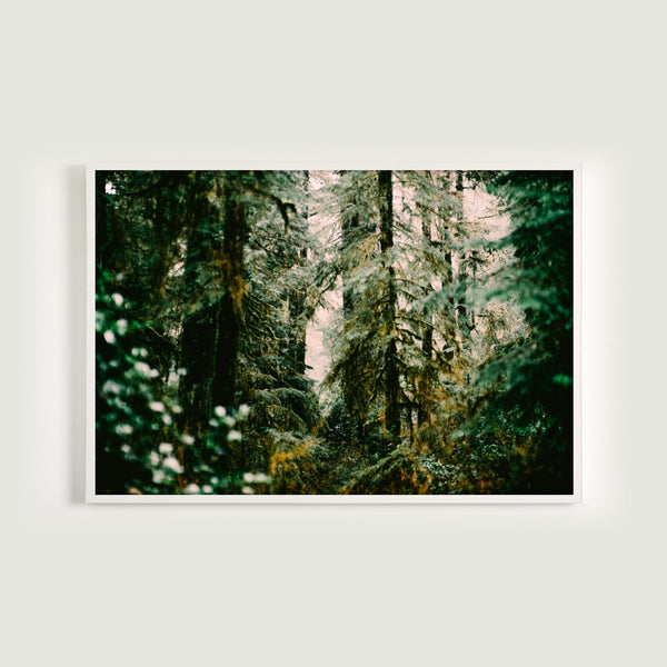 Forest Light Study VI