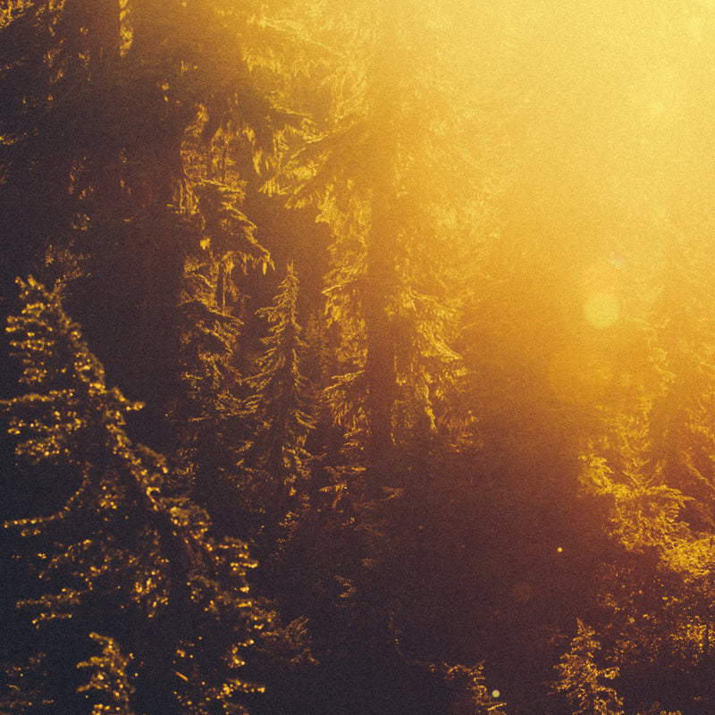 Forest Light Study VII