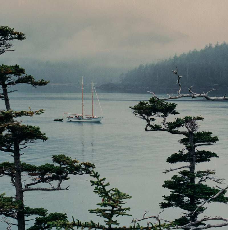 Misty Morning, Gwaii Haanas