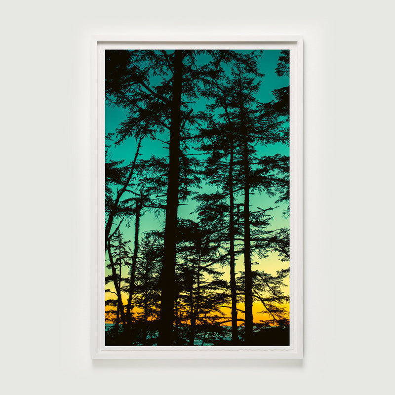 Dusk Through Shore Pines