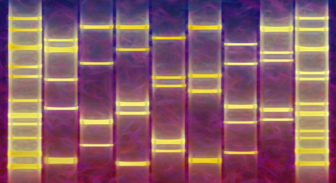 Abstract Curves DNA Art