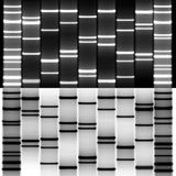 Combined DNA Art Black White for Couples
