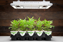 IN STOCK Our Best Selling Compact And Affordable LED Grow Light The FGI Square 2