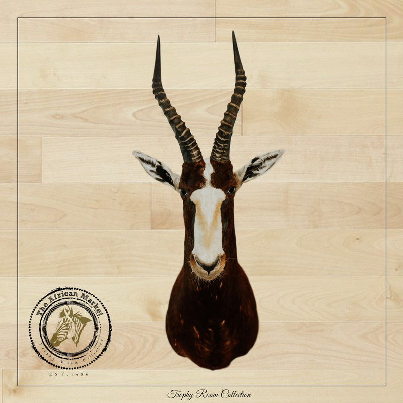 SHOULDER MOUNT - Blesbok Trophy - Trophy Room Collection