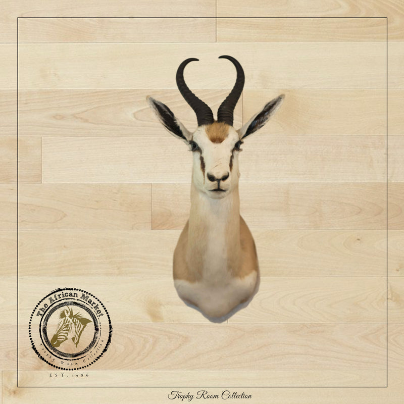 SHOULDER MOUNT - Springbok Trophy 2 - Trophy Room Collection