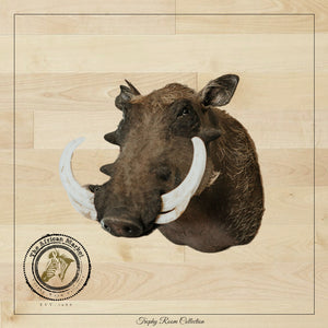 SHOULDER MOUNT - Warthog Trophy - Trophy Room Collection
