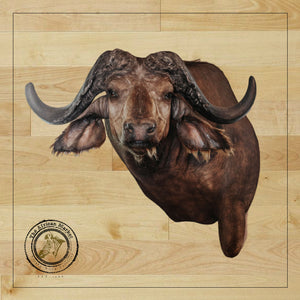 SHOULDER MOUNT - Cape Buffalo Trophy #1 - Trophy Room Collection