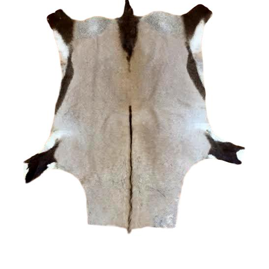 FULL HIDE - Gemsbok - Trophy Room Collection