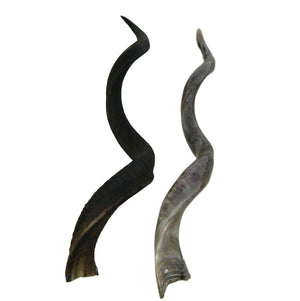 Natural Kudu Horn - Trophy Room Collection