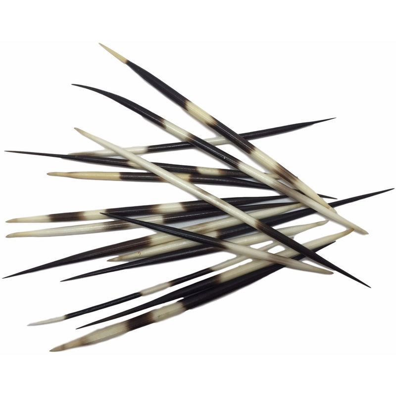 PORCUPINE - Quills (12/PK) - Trophy Room Collection